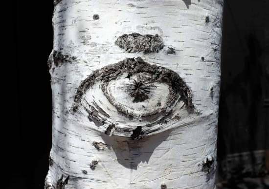 eye-tree